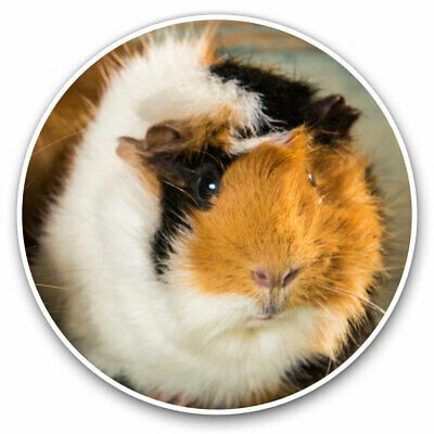 2 X Vinyl Stickers 7.5cm - Cute Fluffy Guinea Pig Animals Pets Cool Gift #8477 • 2.49£